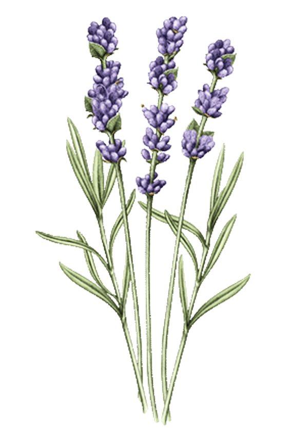 L'OCCITANE Lavender Hand Cream full size